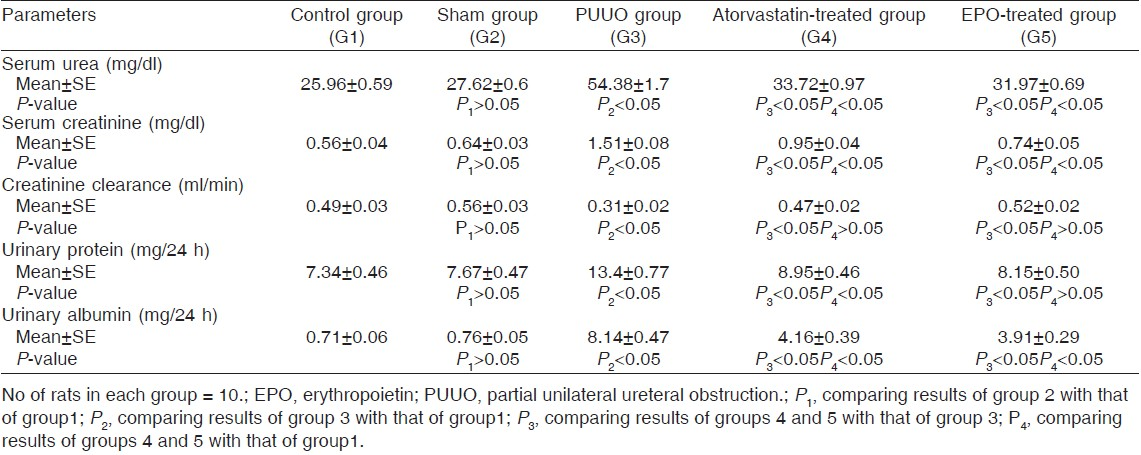 Table 2: Effect of atorvastatin and erythropoietin on serum urea, creatinine, urinary protein, and albumin levels, as well as creatinine clearance, after 14 days of PUUO in rats